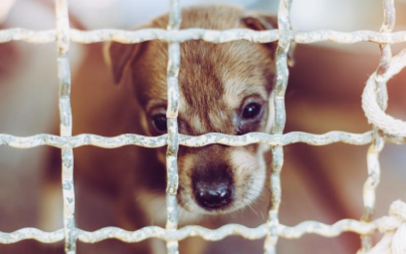 Soi Dog Foundation จากแนวคิดการทำงานเพื่อสังคมสู่การก่อตั้งมูลนิธิเพื่อชีวิตหมาแมวจรที่ดีขึ้น
